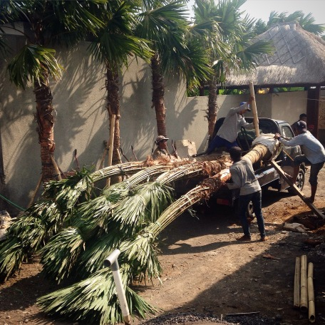 Palmtree_Delivery
